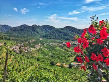 ユネスコ世界遺産、ヴェネト州プロセッコワインの丘陵地帯